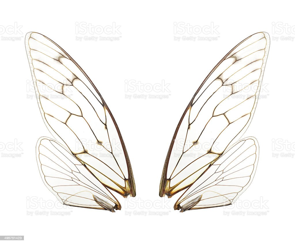Four cicada wings,Super size stock photo