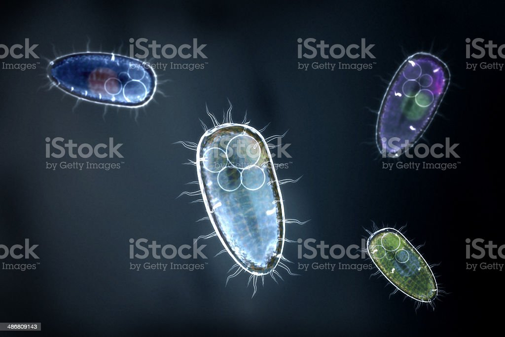 four colorful protozoons / unicellular organism stock photo