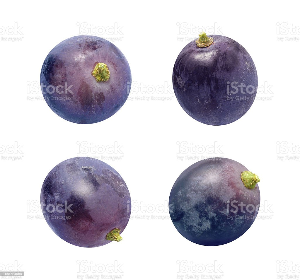 Four Concord Grapes Isolated on white stock photo