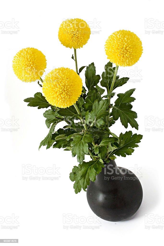 four crysanthemum stock photo