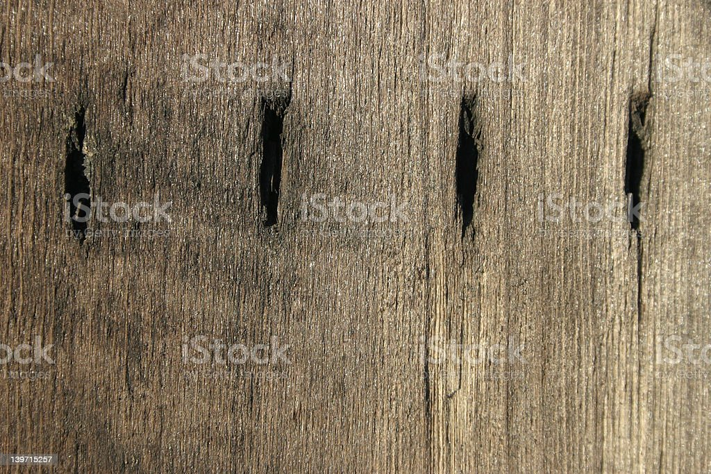 Four Dits in Da Wood royalty-free stock photo