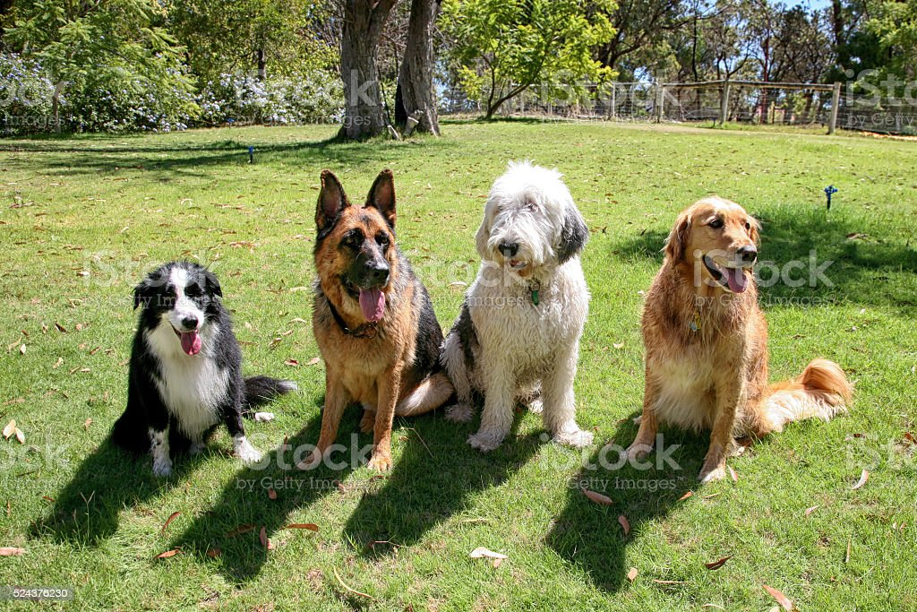 Four Dogs In A Garden stock photo