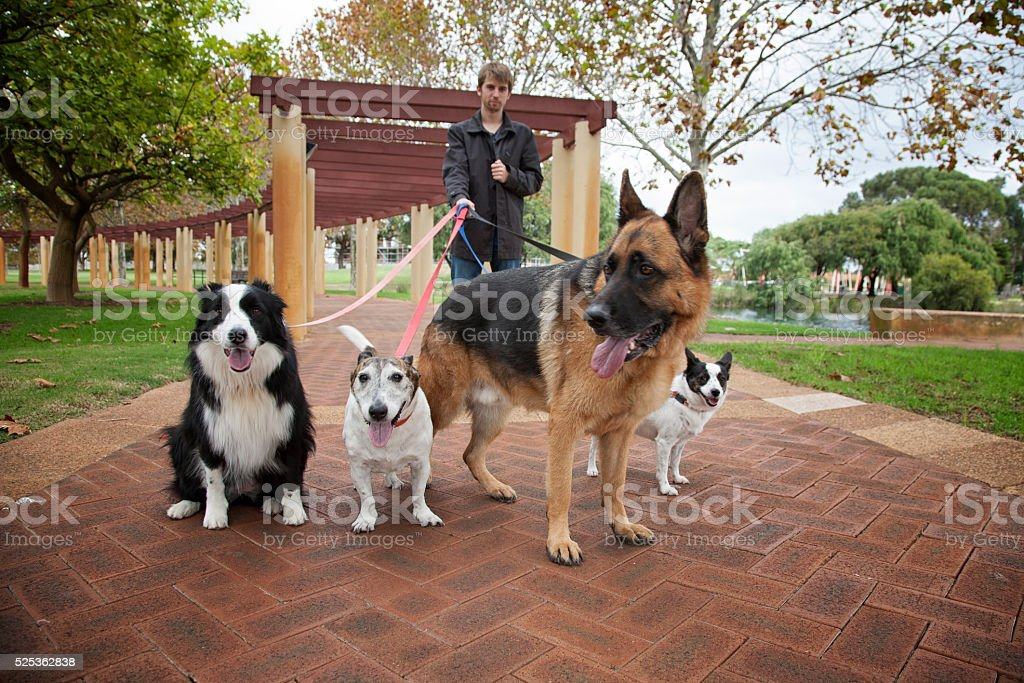 Four Dogs On A Walk stock photo