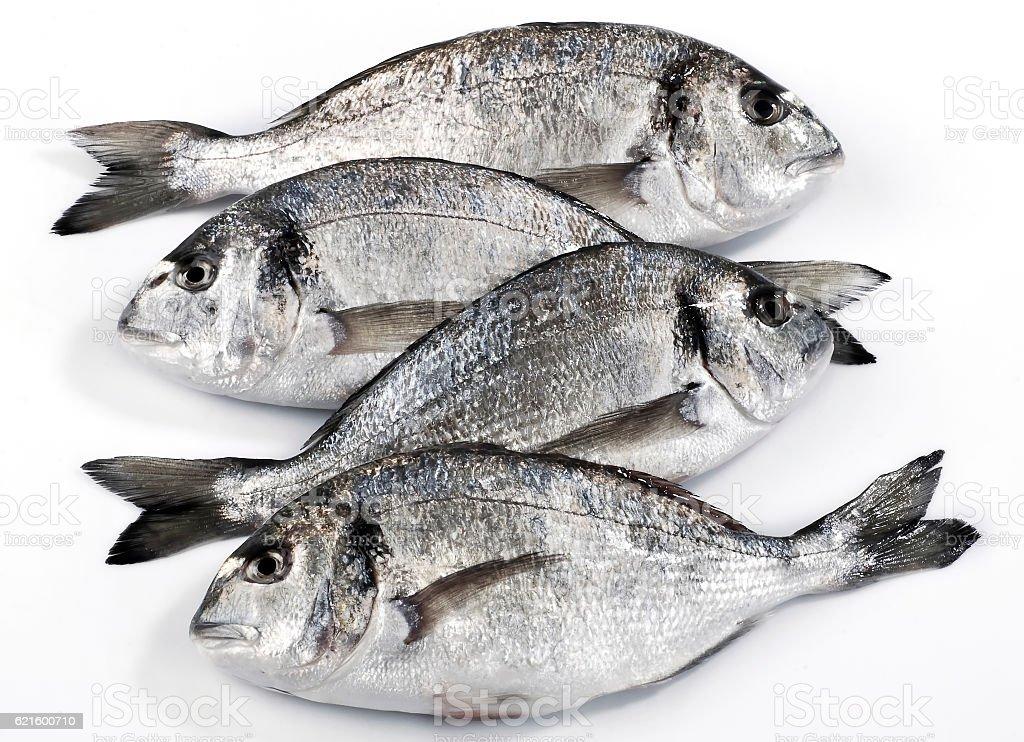 Four dorado fish isolated on white background stock photo