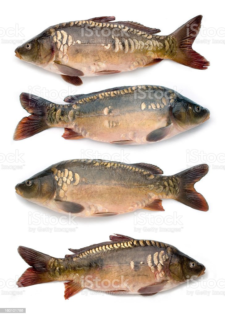four fishes royalty-free stock photo