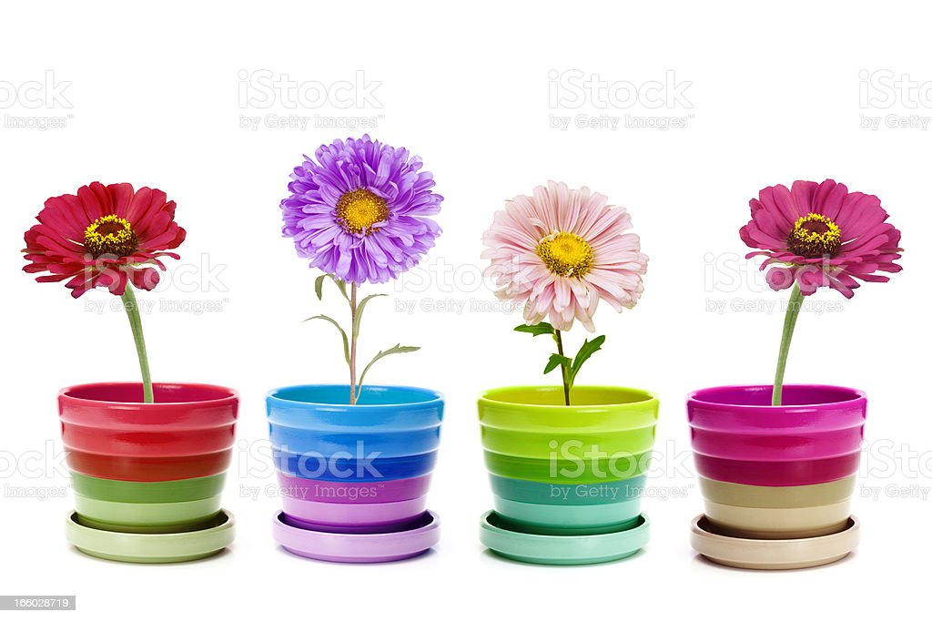 four flowers royalty-free stock photo