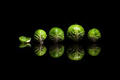 Four fresh green brussels sprouts in row isolated on black