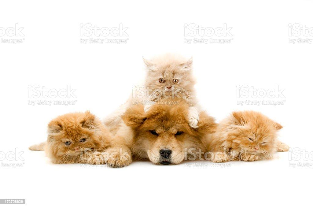 four friends, stock photo