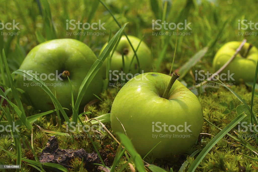 Four green apples in grass royalty-free stock photo