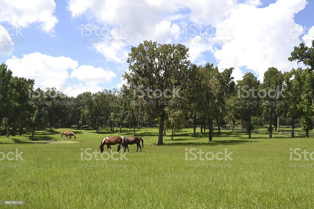 Four Horses & A Pond stock photo