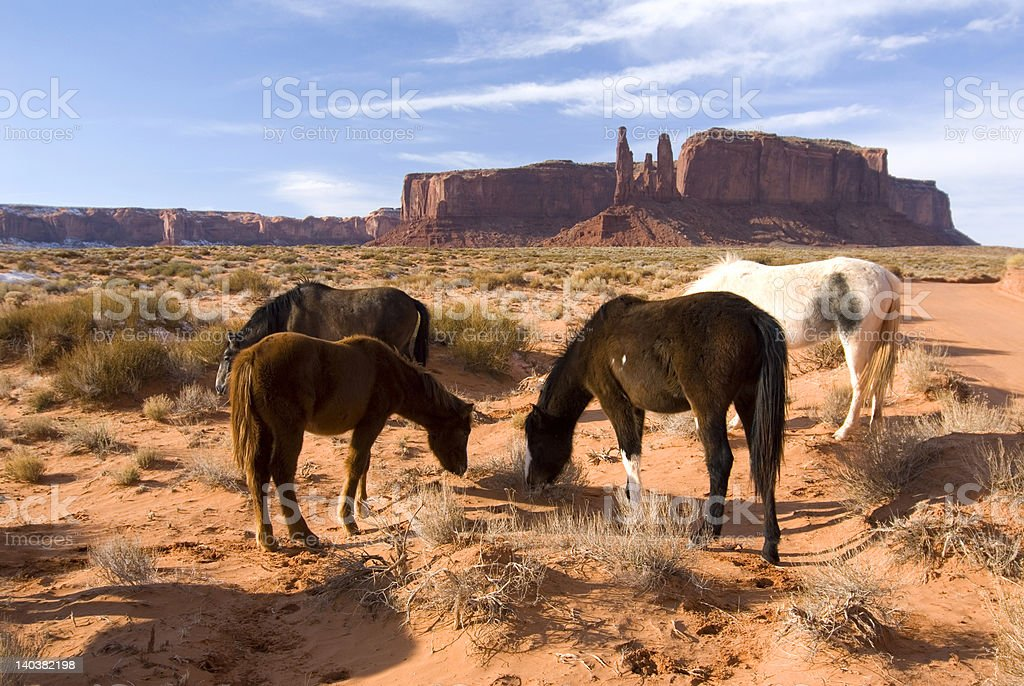 Four horses grazing on the desert of Monument Valley royalty-free stock photo