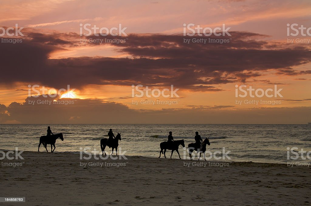 Four horses ridden on a beach - sun setting. stock photo