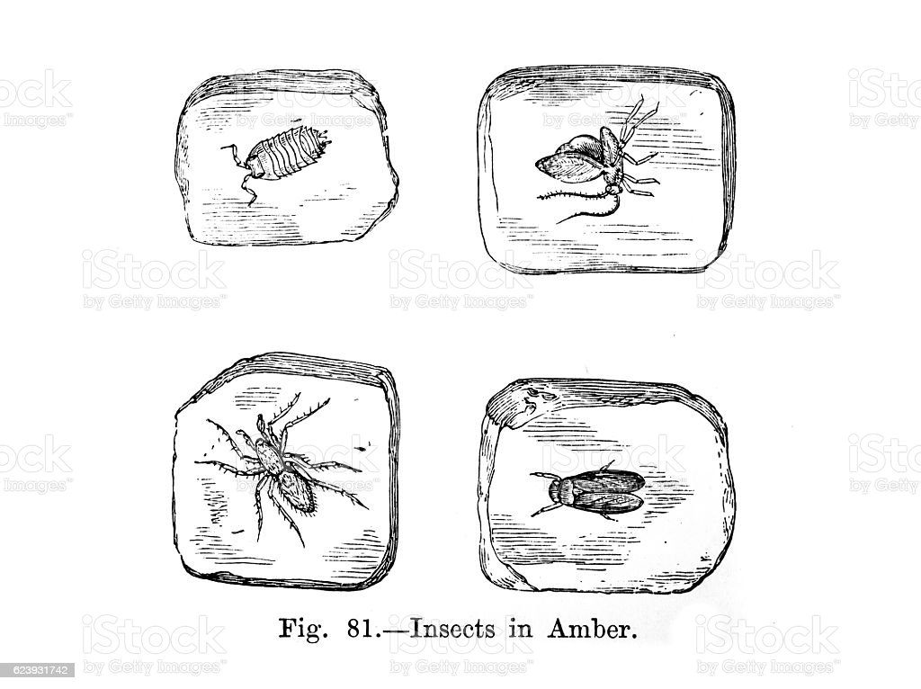 Four Insects in Amber stock photo
