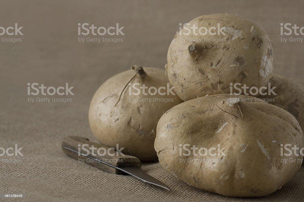 Four Jicama Roots stock photo