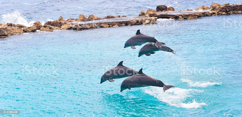Four Jumping Dolphins stock photo