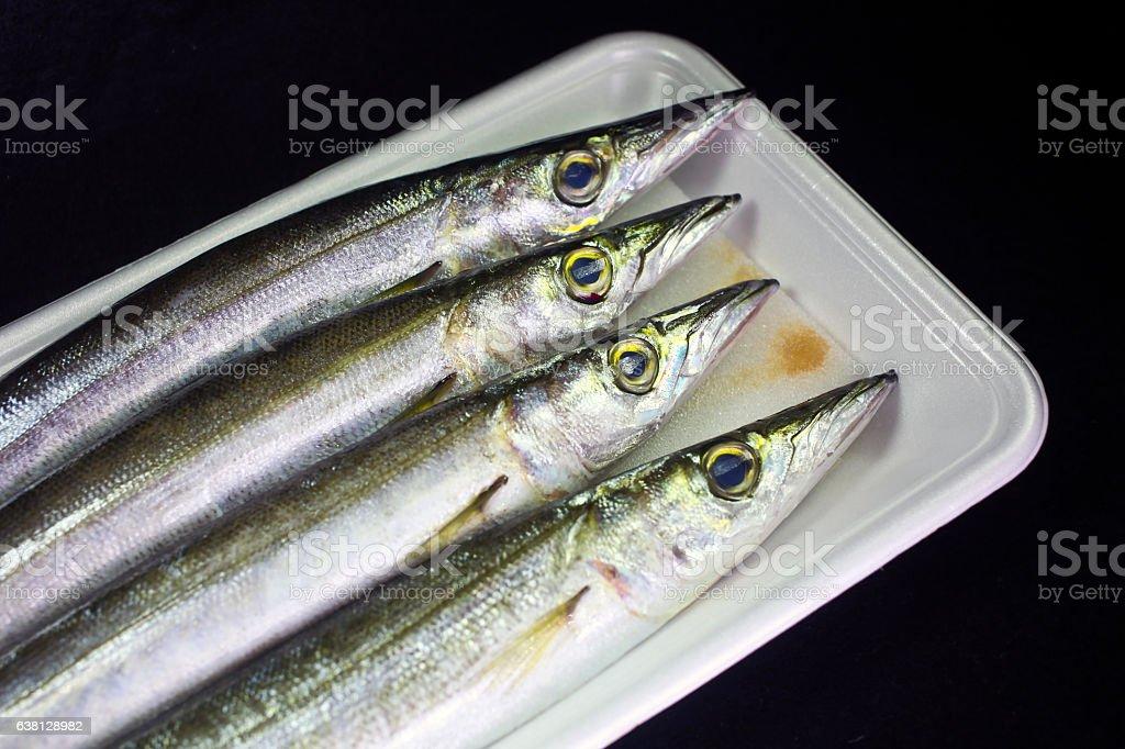 Four Kamasu (Japanese barracuda) fish in plastic tray stock photo