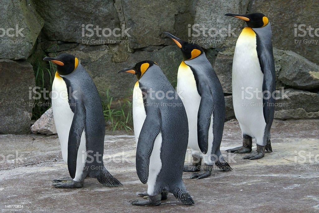 Four King Penguins royalty-free stock photo
