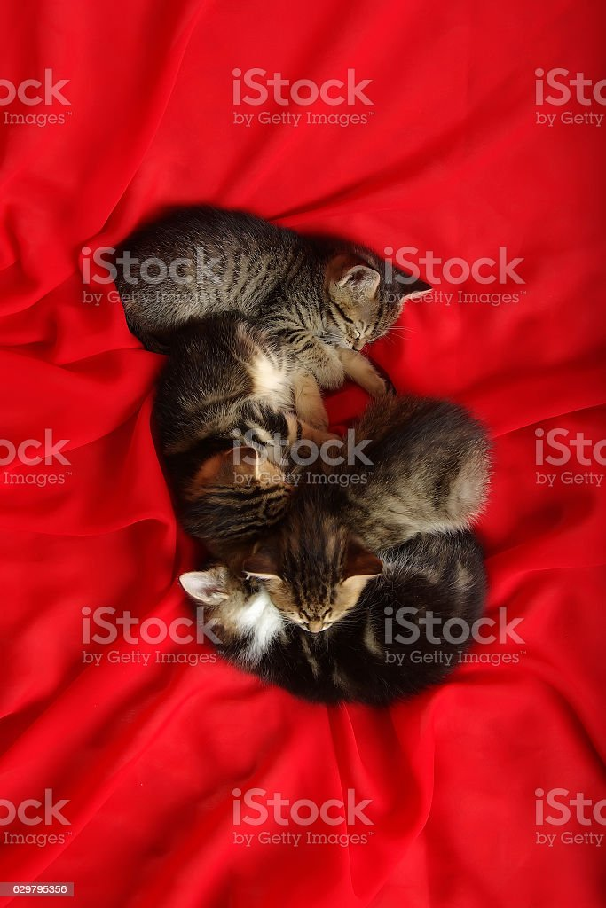Four kitten on red tissue stock photo