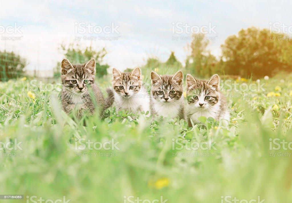 Four kittens stock photo