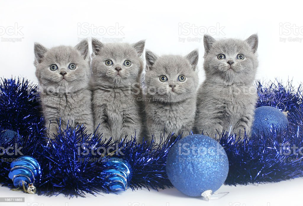Four kittens with Christmas balls. royalty-free stock photo