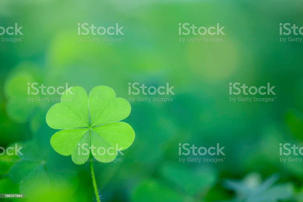Four Leaf Clover Background Horizontal royalty-free stock photo