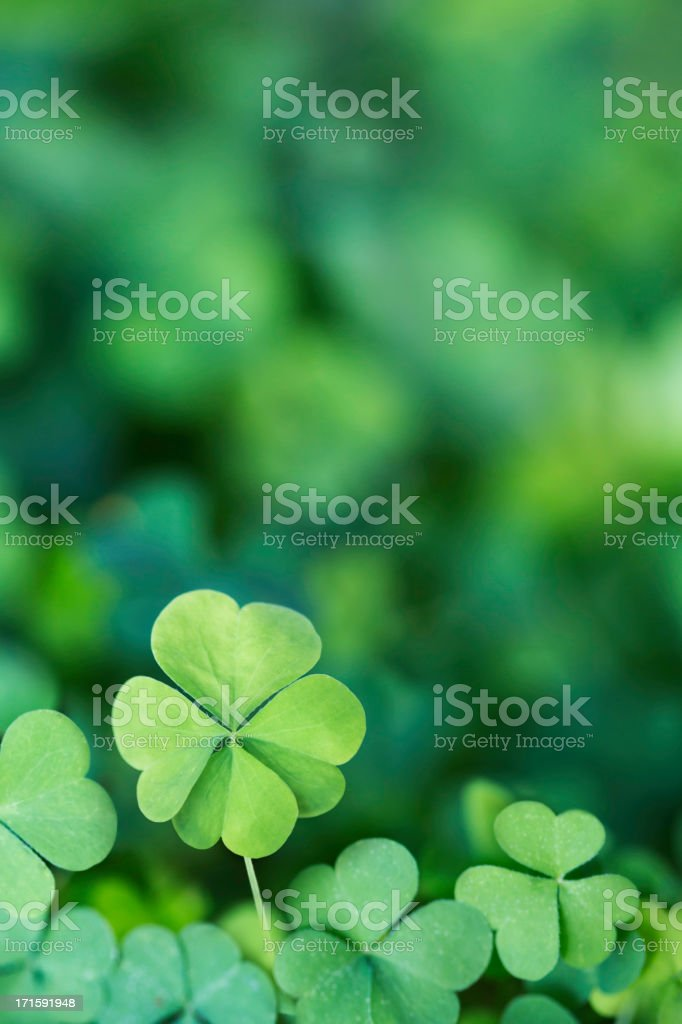 Four Leaf Clover Background Vertical stock photo