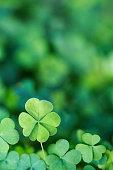 Four Leaf Clover Background Vertical