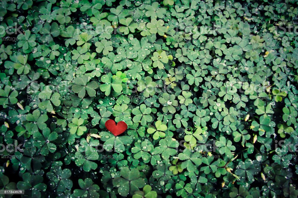 Four Leaf Clover Background with heart stock photo