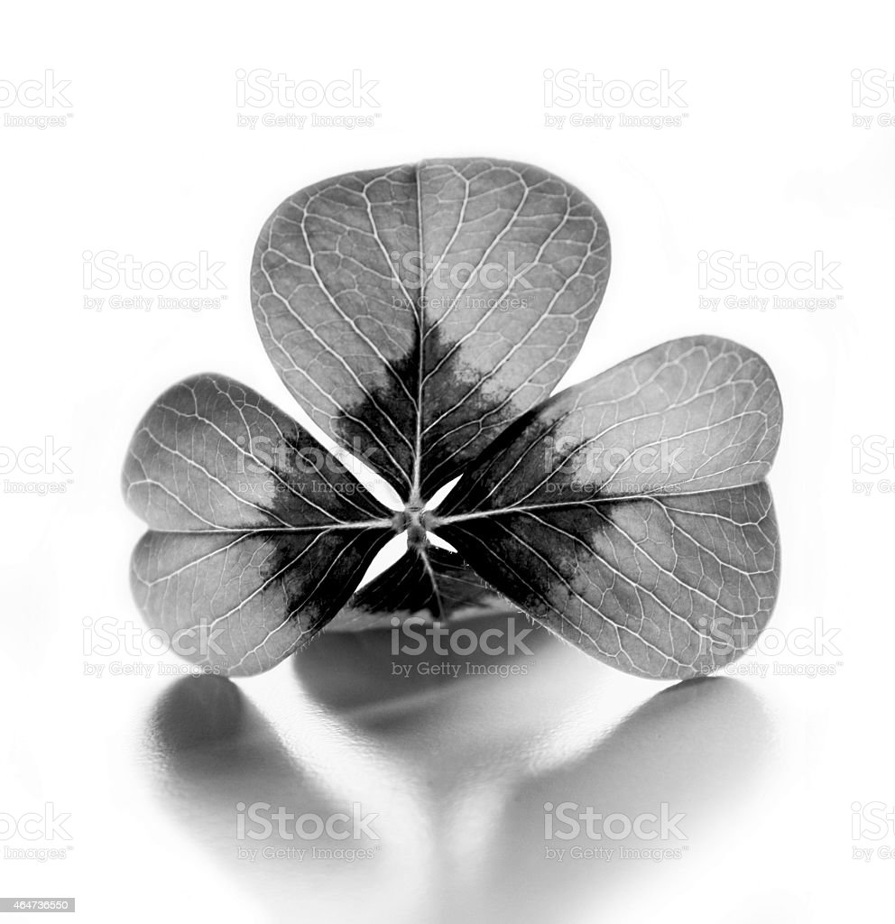 Four Leaf Clover Black and White stock photo