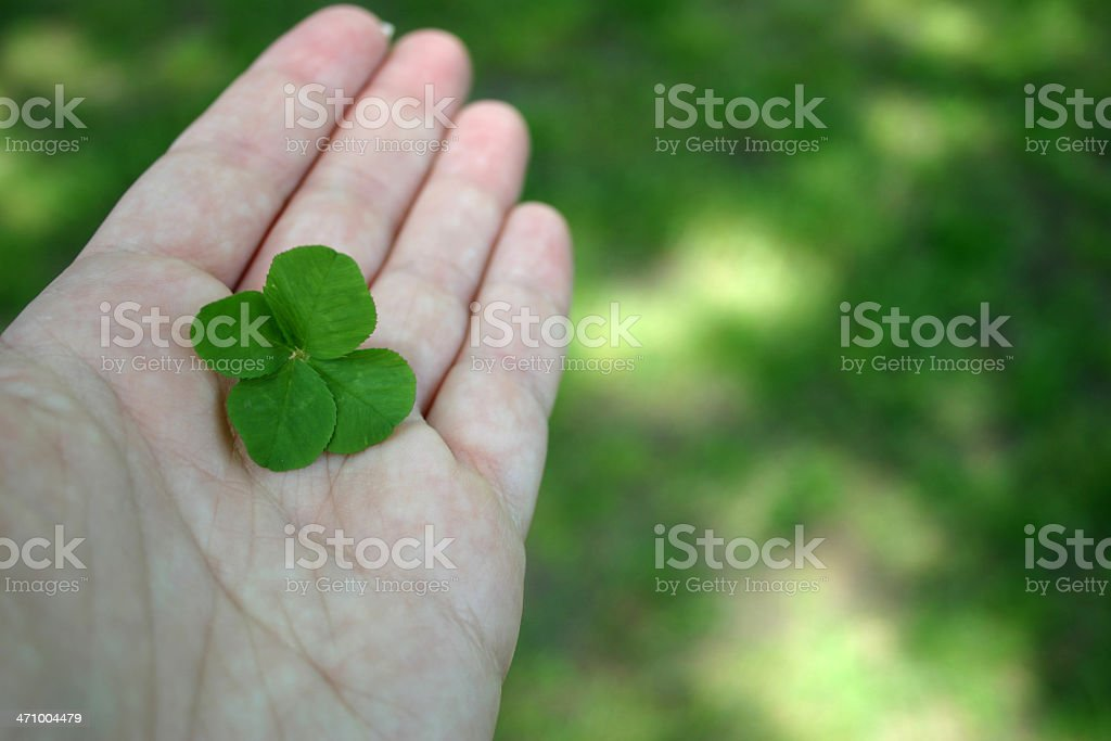 Four Leaf Clover II royalty-free stock photo