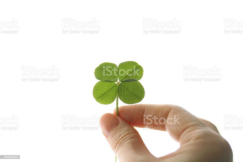four leaf clover in hand stock photo
