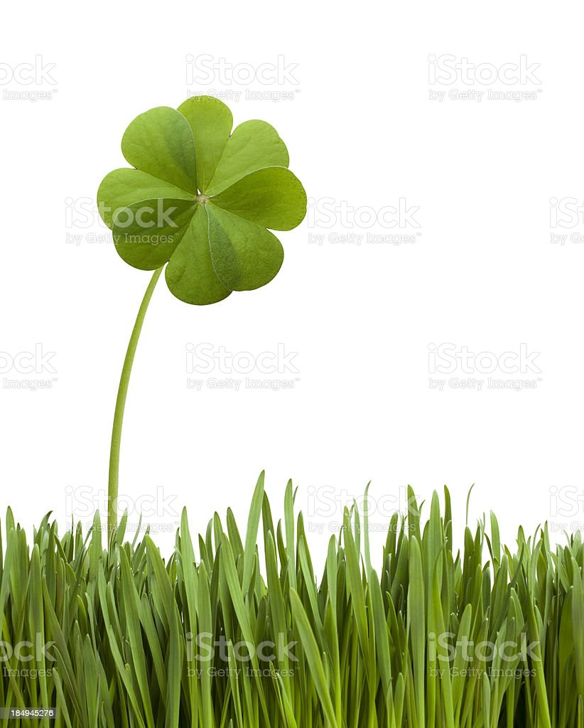 Four leaf clover in the grass stock photo