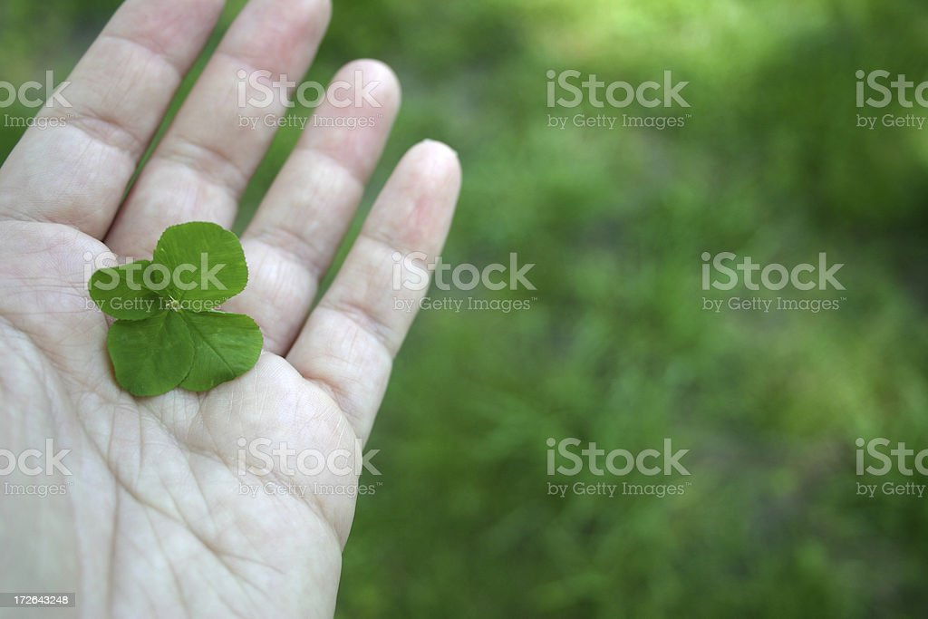 Four Leaf Clover IV royalty-free stock photo