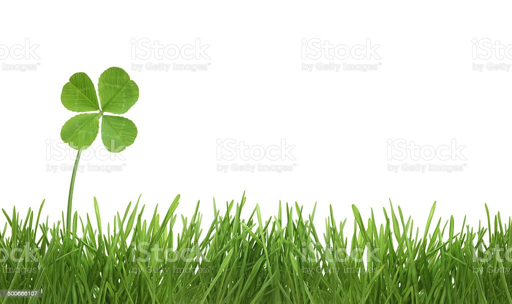 Four leaf clover on grass stock photo