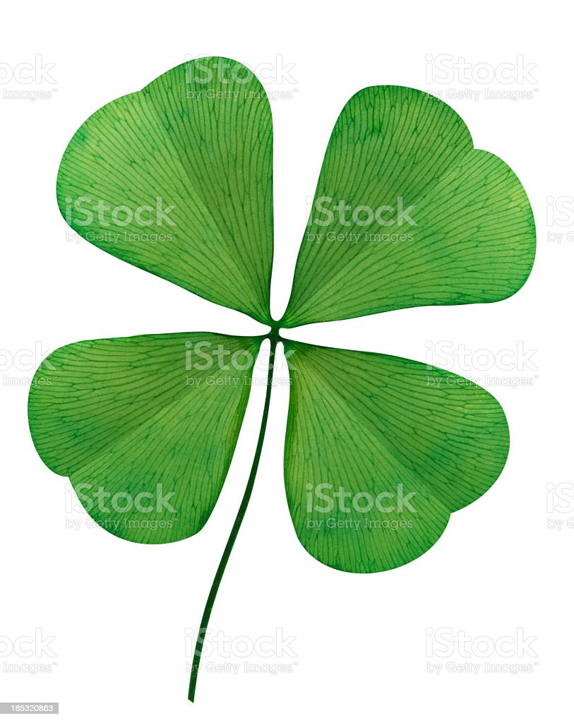Four Leaf Clover On White Background stock photo