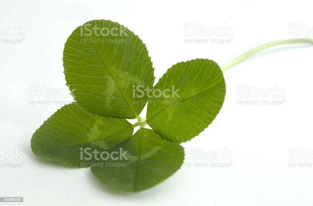 Four leaf clover on white stock photo