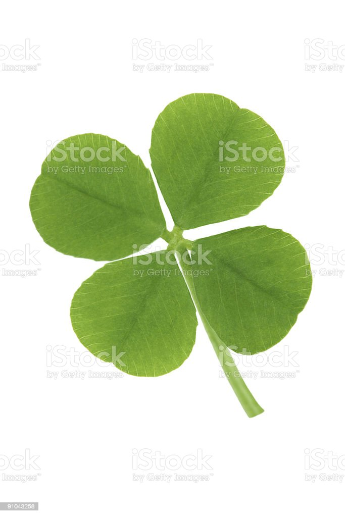 Four Leaf Clover (Isolated) stock photo
