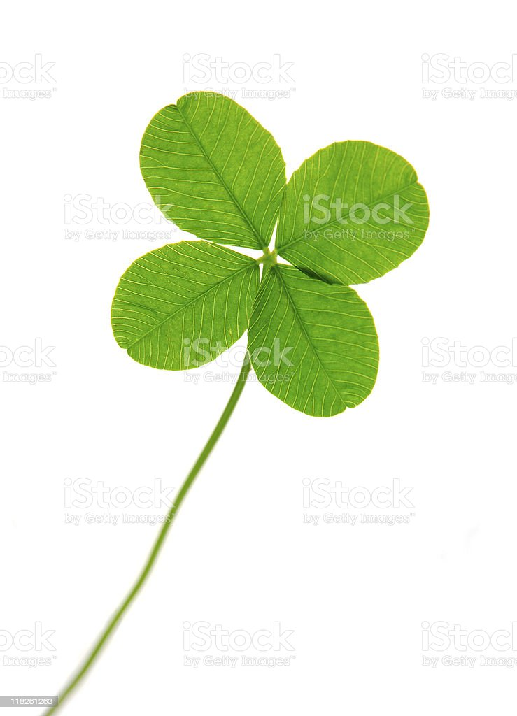 A four leaf clover with white space  royalty-free stock photo