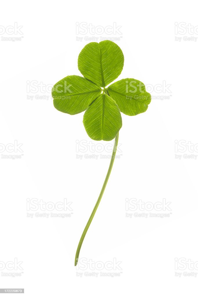 Four leaves clover isolated stock photo