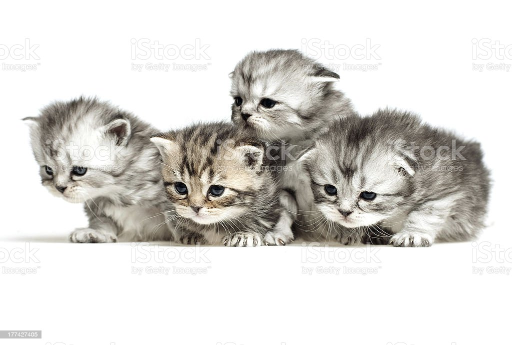 Four little kitten stock photo