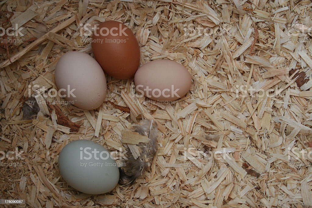Four Naturally colored eggs stock photo