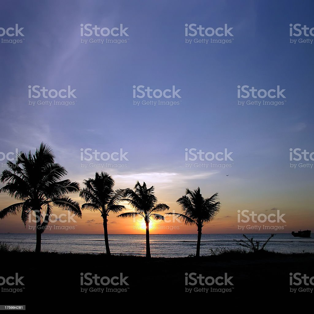 Four Palm Trees on Aruba stock photo