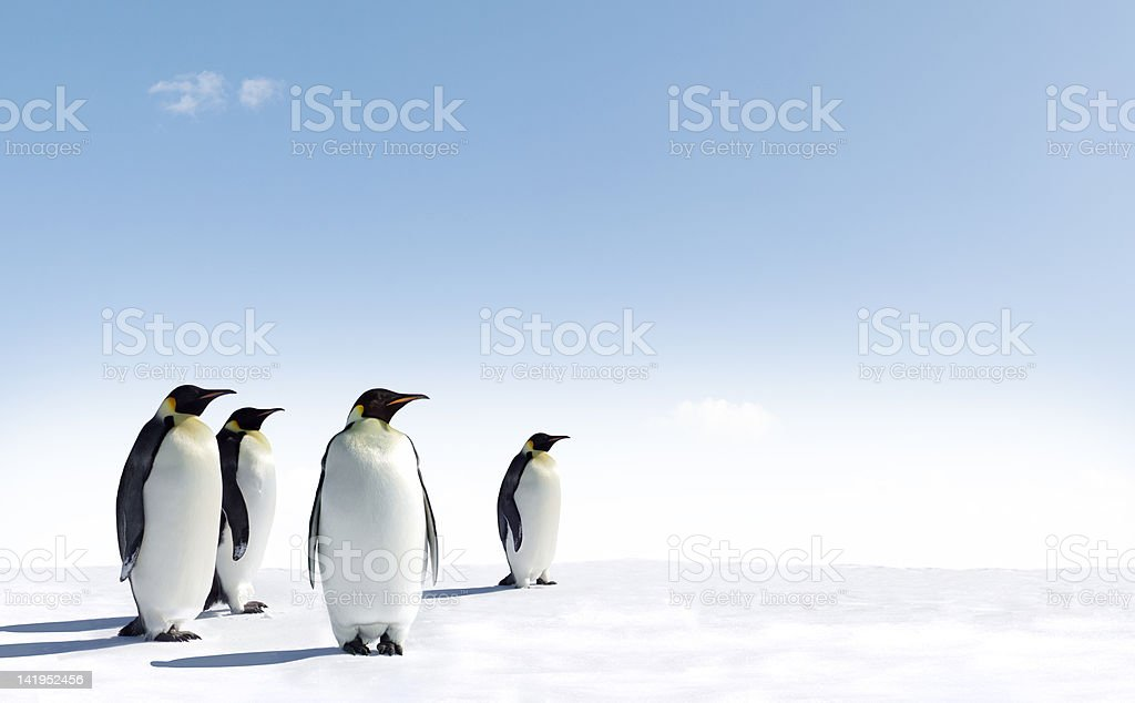 Four penguins stood on snow with pale blue sky stock photo