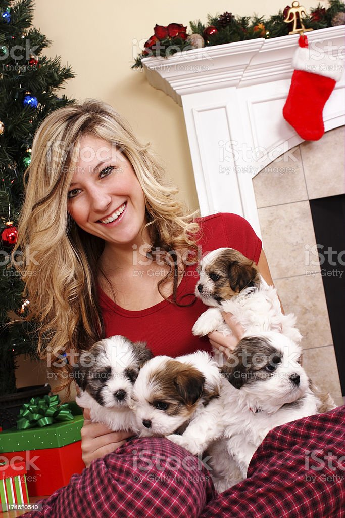 Four Puppies for Christmas royalty-free stock photo