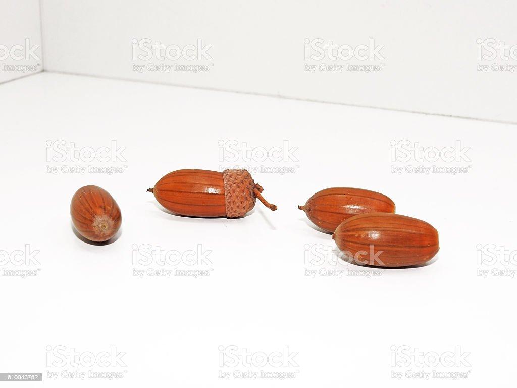 Four ripe acorns stock photo