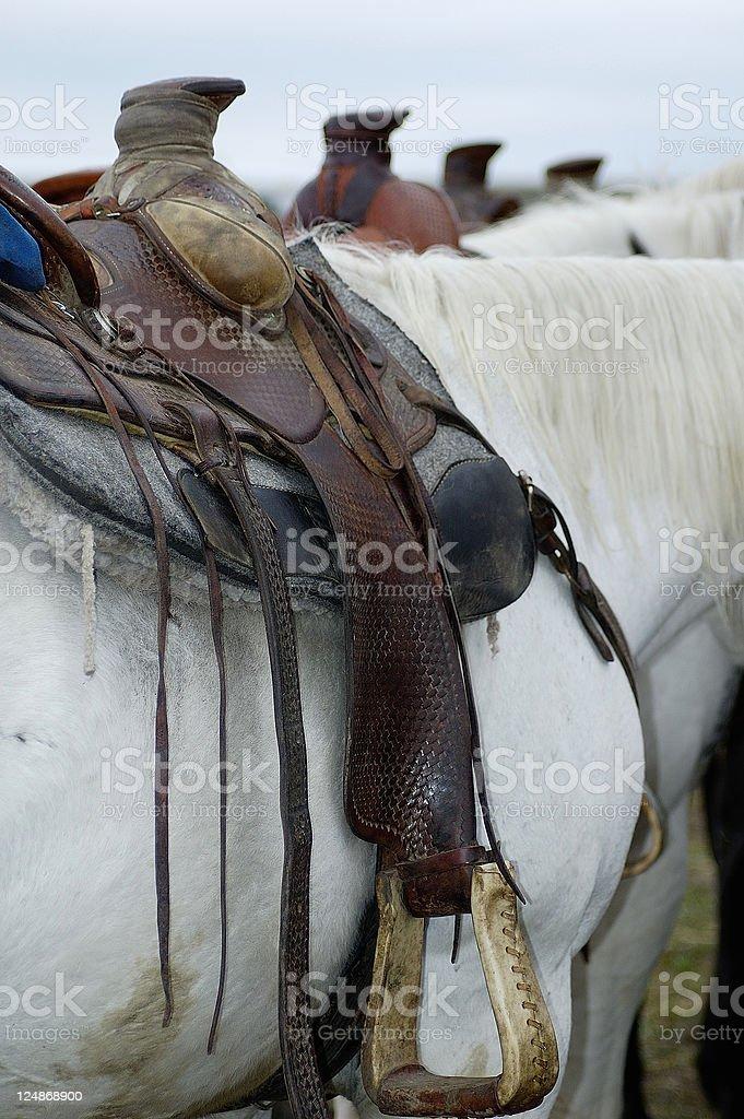 Four Saddle Horns royalty-free stock photo