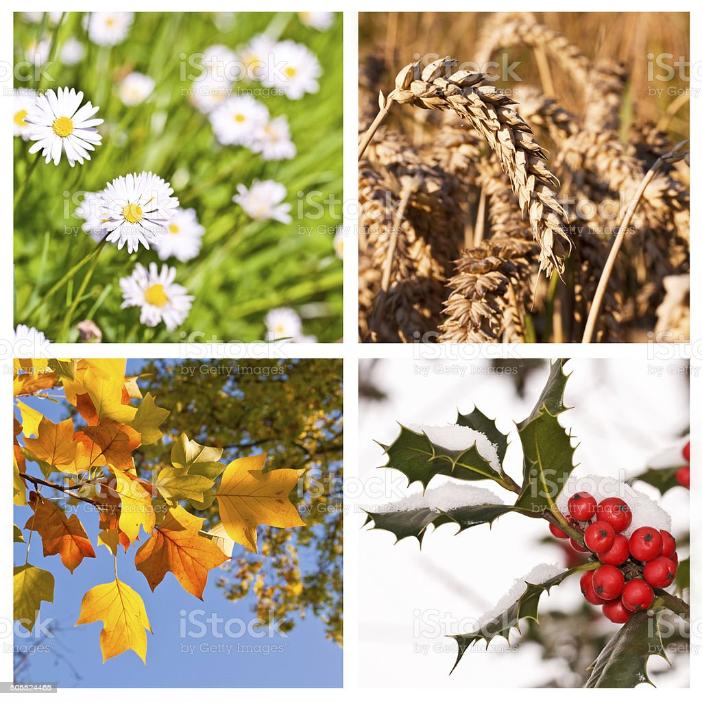 Four season collage concept stock photo