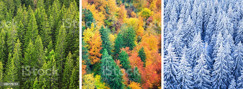Four Season Forest stock photo