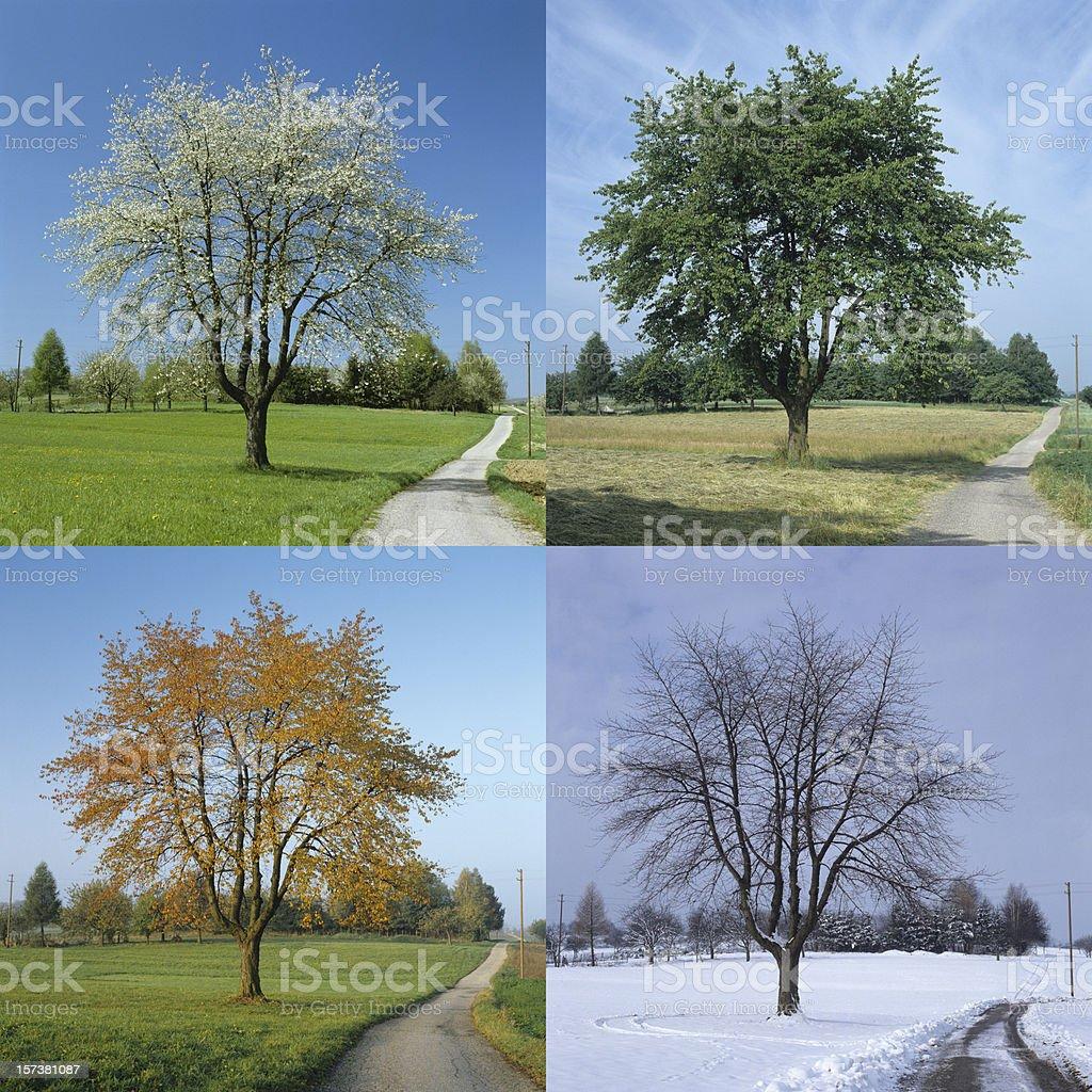Four Season (image size XXL) stock photo