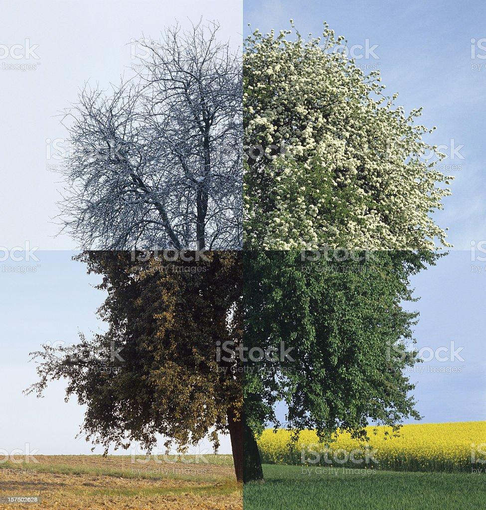 Four Season (image size XXXL) royalty-free stock photo